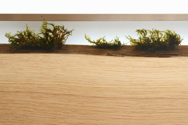 bookcase with moss 1