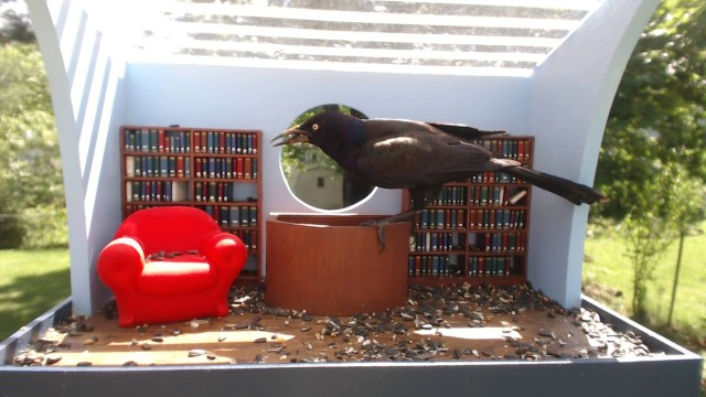 Library for the birds