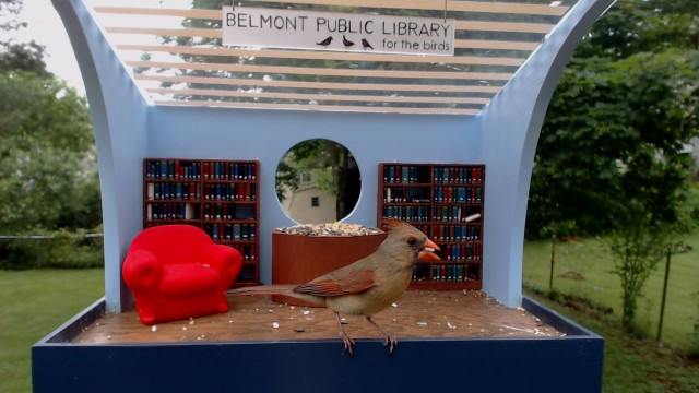 Library for the birds b
